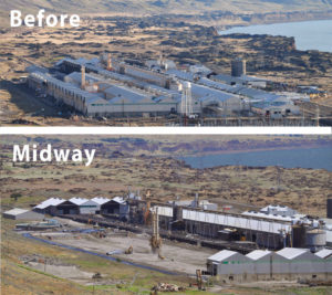 goldendale plant photo - before and midway
