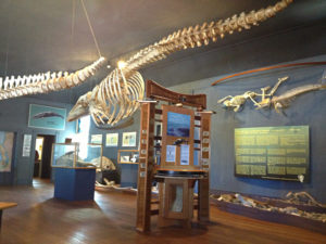 Whale skeleton with REvision Division Display